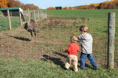 Green-meadows-farm-102810-07