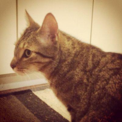 Mystery cat 2