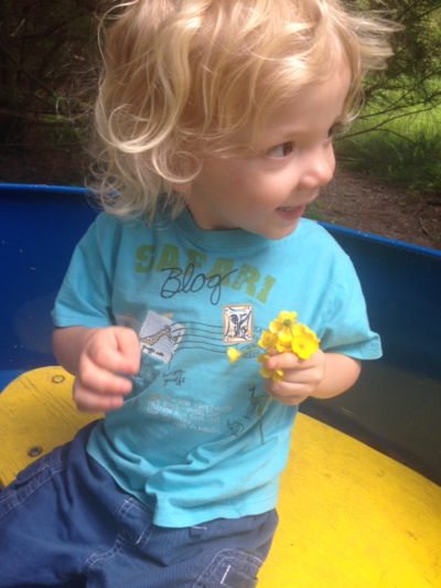 Ike buttercups