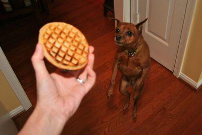 Ceiba waffle