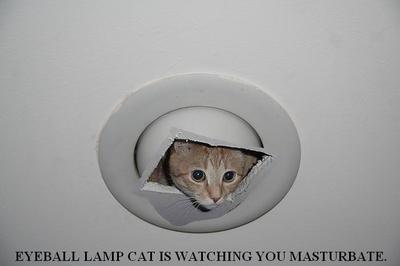 Lightbulb_cat